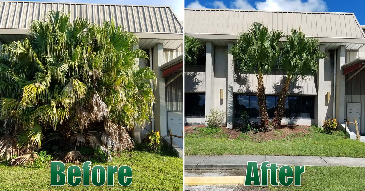 Palm trees and Tree Removal Before and After